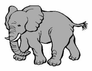 African Elephant 353x271