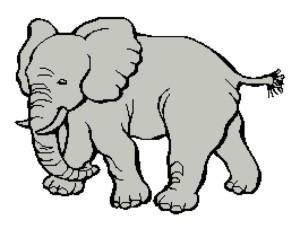 African Elephant 265x203
