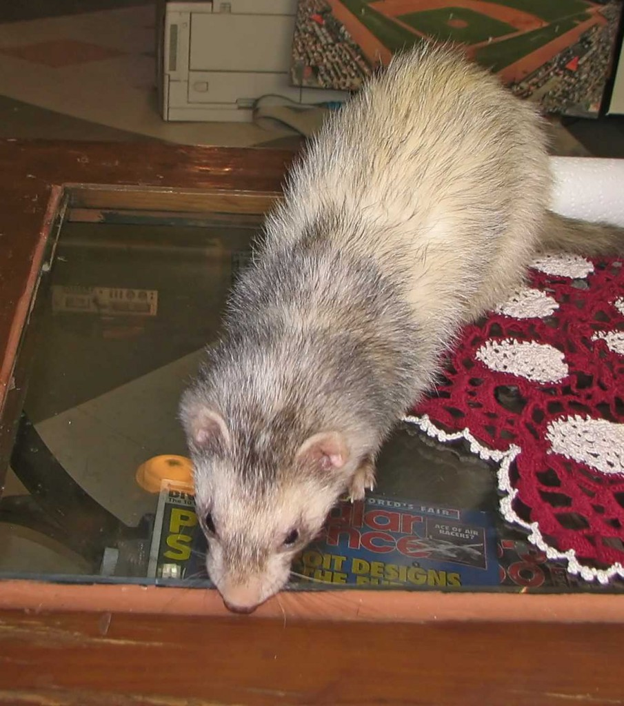 """Bandit on the 33"""" Coffee table"""