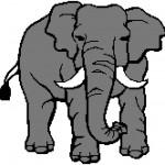 Elephant 170x166