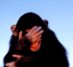 Embarrassed Chimp