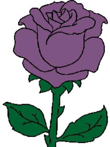 Rose 2 226x343