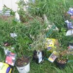New plants 1