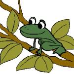 Frog 3 275x212