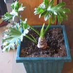 Big House Plant
