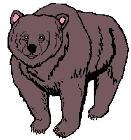 Brown Bear 1 246x263