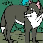 Wolf 1 164x218