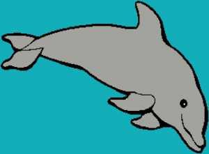 Dolphin 1 280x207